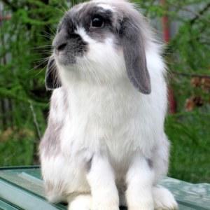 Прогулки с кроликом – где, когда, как?