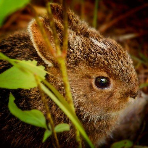 Кормление кроликов летом: фрукты и травы