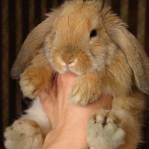 Это обязательно нужно знать перед разведением декоративных кроликов!