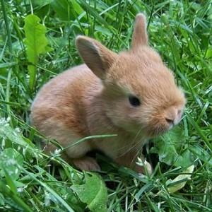Тепловой удар у кролика– опасность для питомца!