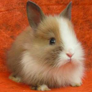 Не покупайте кролика из жалости!
