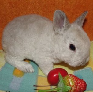 Экзотический рацион для кролика – польза или вред?