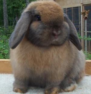 Где купить карликового кролика? Выбираем продавца