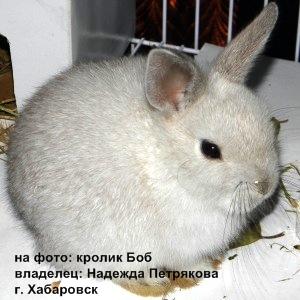 Кормление кроликов летом: овощи и зелень