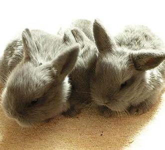 Покупка кроликов. Да или нет?