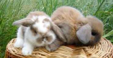 Правильный уход за кроликами. Профилактика неприятностей