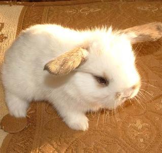 Как приучить кролика к туалету. Советы бывалых