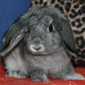 Как приучить кролика к лотку. Подробное руководство