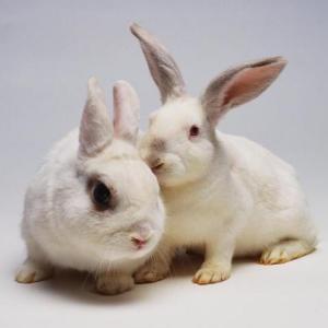 И еще немного о разведении кроликов